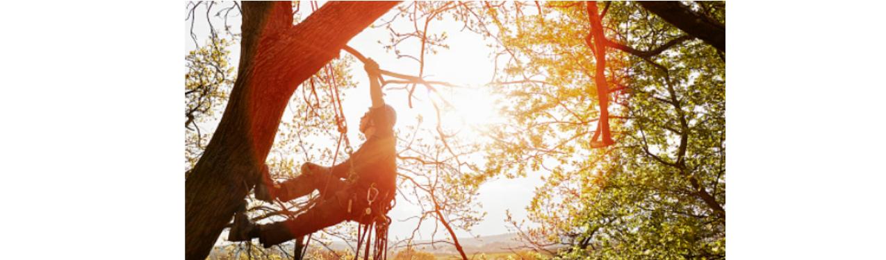 treeclimber2.png